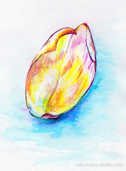 山茶花の花弁のイラスト