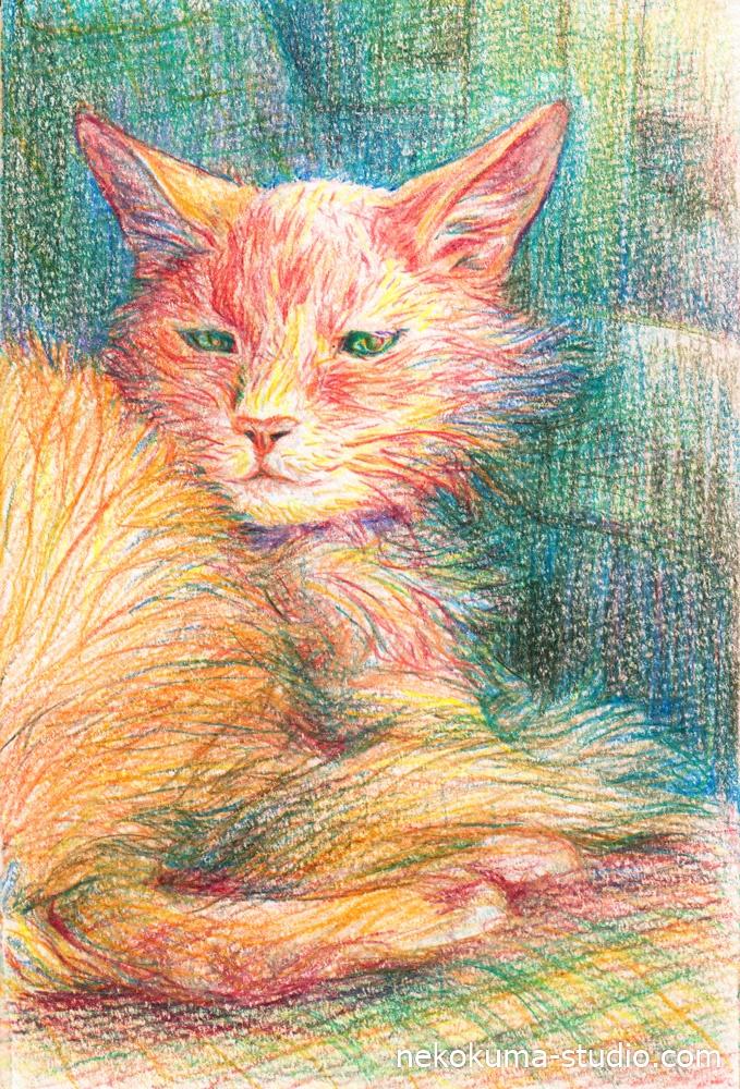 色鉛筆で愛猫を描きました