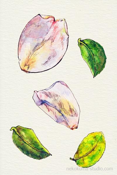 山茶花の花弁と葉のイラスト